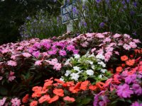 seasonalcolor5