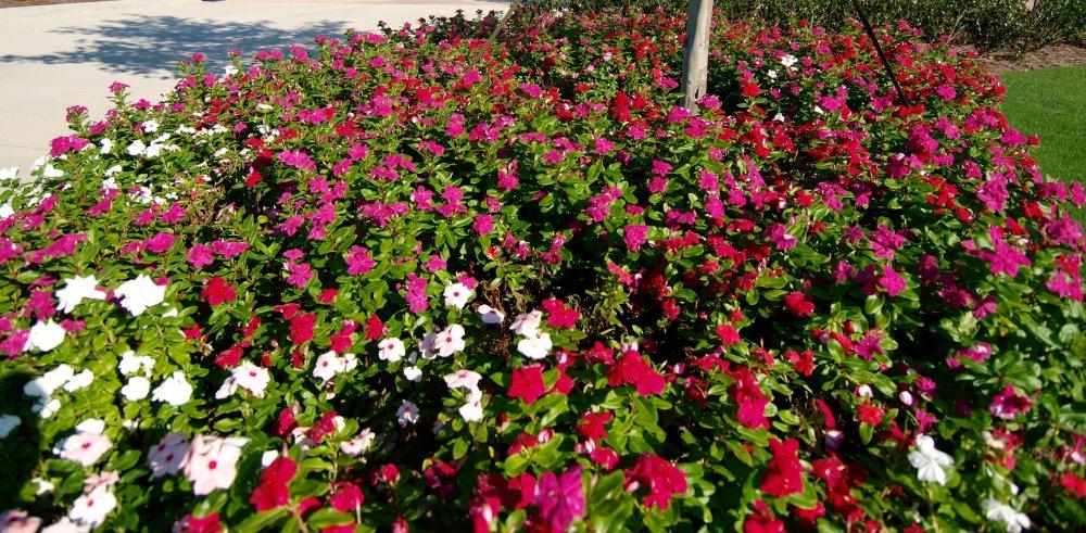 seasonalcolor9
