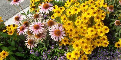 Seasonal Color Services